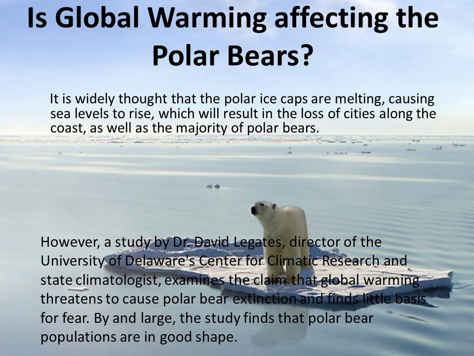 Is Global Warming affecting the Polar Bears? It is widely thought that the polar ice caps are melting, causing sea levels to rise, which will result i