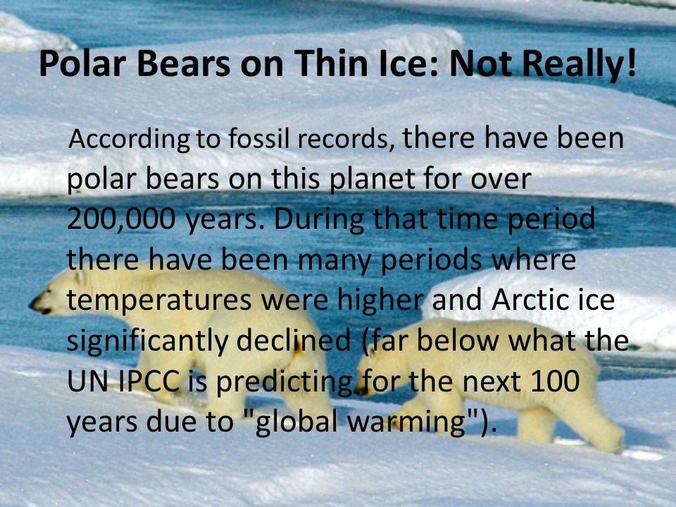 According to fossil records, there have been polar bears on this planet for over 200,000 years. During that time period there have been many periods w