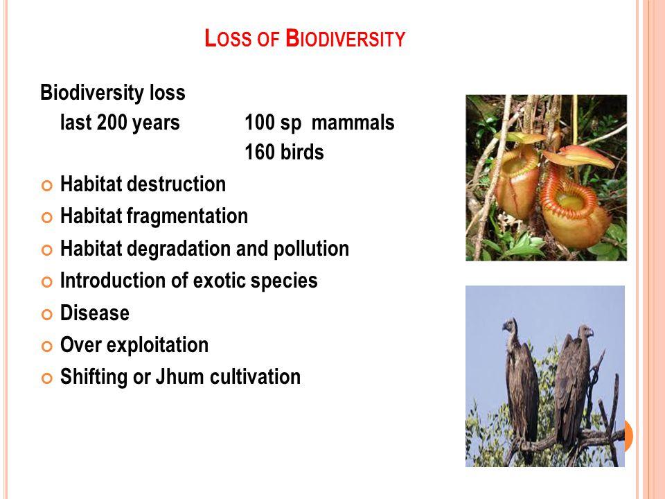L OSS OF B IODIVERSITY Biodiversity loss last 200 years 100 sp mammals 160 birds Habitat destruction Habitat fragmentation Habitat degradation and pollution Introduction of exotic species Disease Over exploitation Shifting or Jhum cultivation