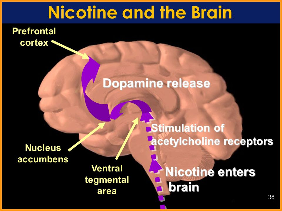 Nicotine Cigarettes and other forms of tobacco contain nicotine Research suggests that nicotine may be as addictive as heroin, cocaine, or alcohol 37