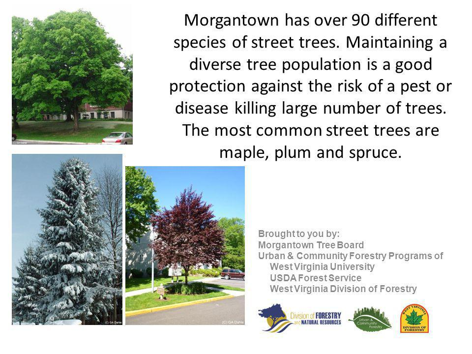 Morgantown has been a Tree City USA Community since 1997.