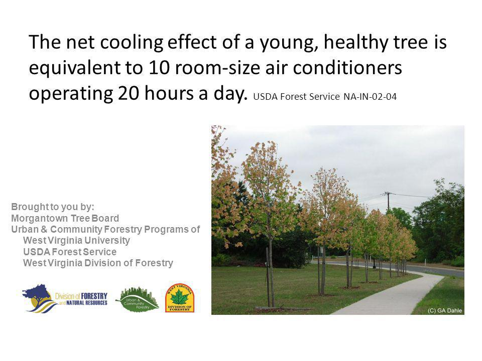 The net cooling effect of a young, healthy tree is equivalent to 10 room-size air conditioners operating 20 hours a day.