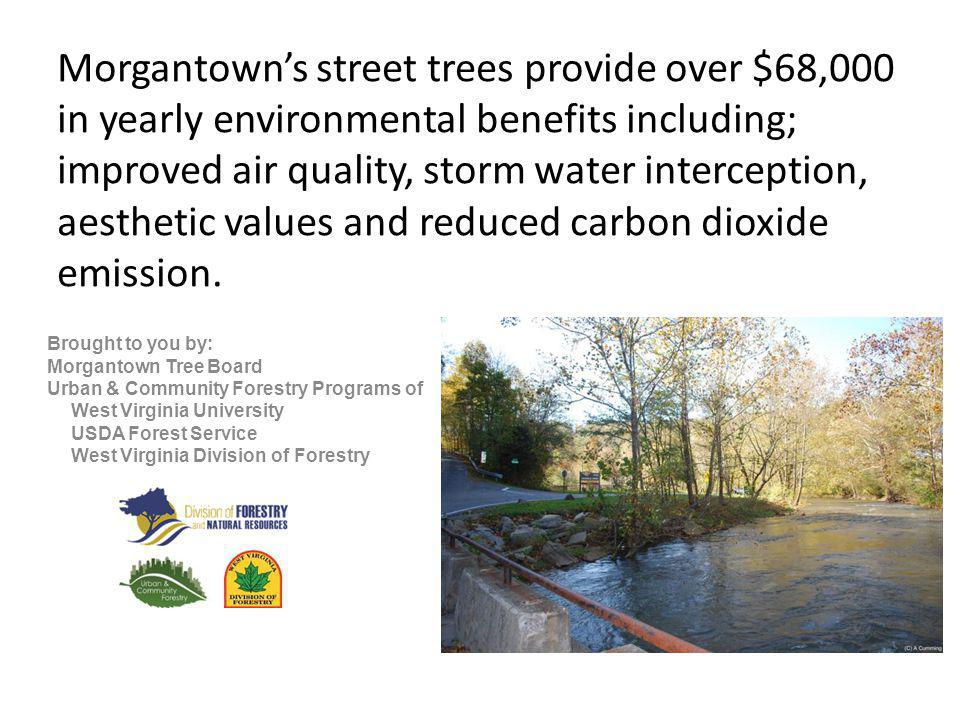 Morgantown street trees return more than $4 in annual benefits for every $1 spent in tree care activities (planting, pruning, removals).