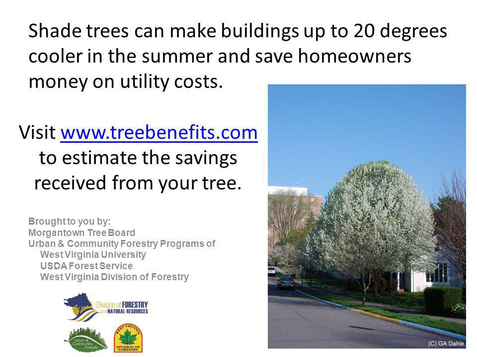 Shade trees can make buildings up to 20 degrees cooler in the summer and save homeowners money on utility costs.