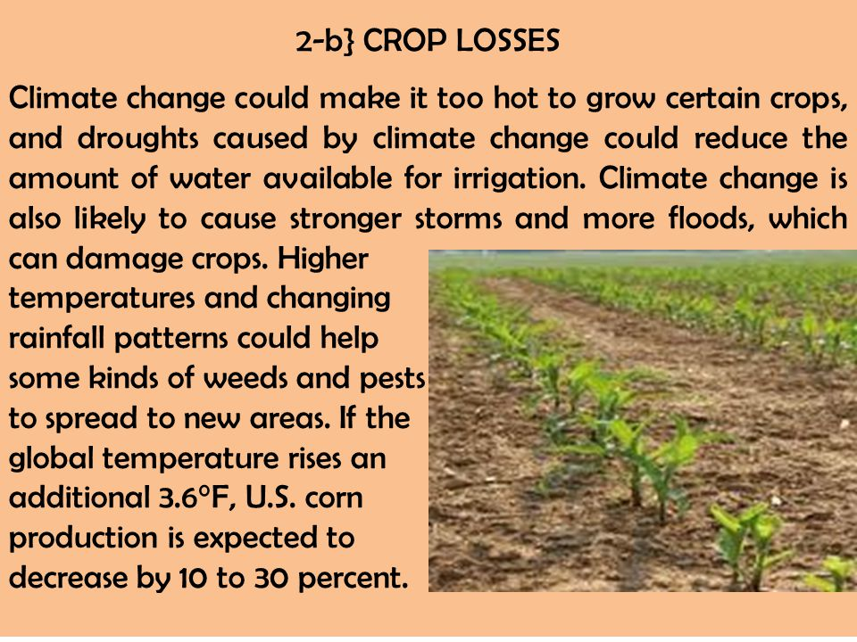 2-b} CROP LOSSES Climate change could make it too hot to grow certain crops, and droughts caused by climate change could reduce the amount of water av