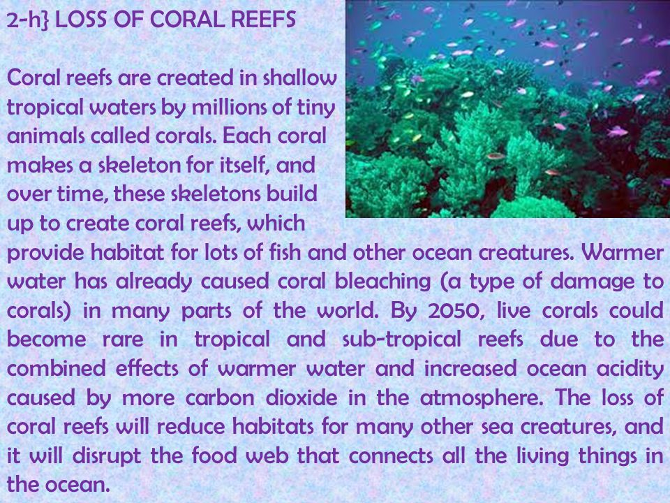 2-h} LOSS OF CORAL REEFS Coral reefs are created in shallow tropical waters by millions of tiny animals called corals. Each coral makes a skeleton for