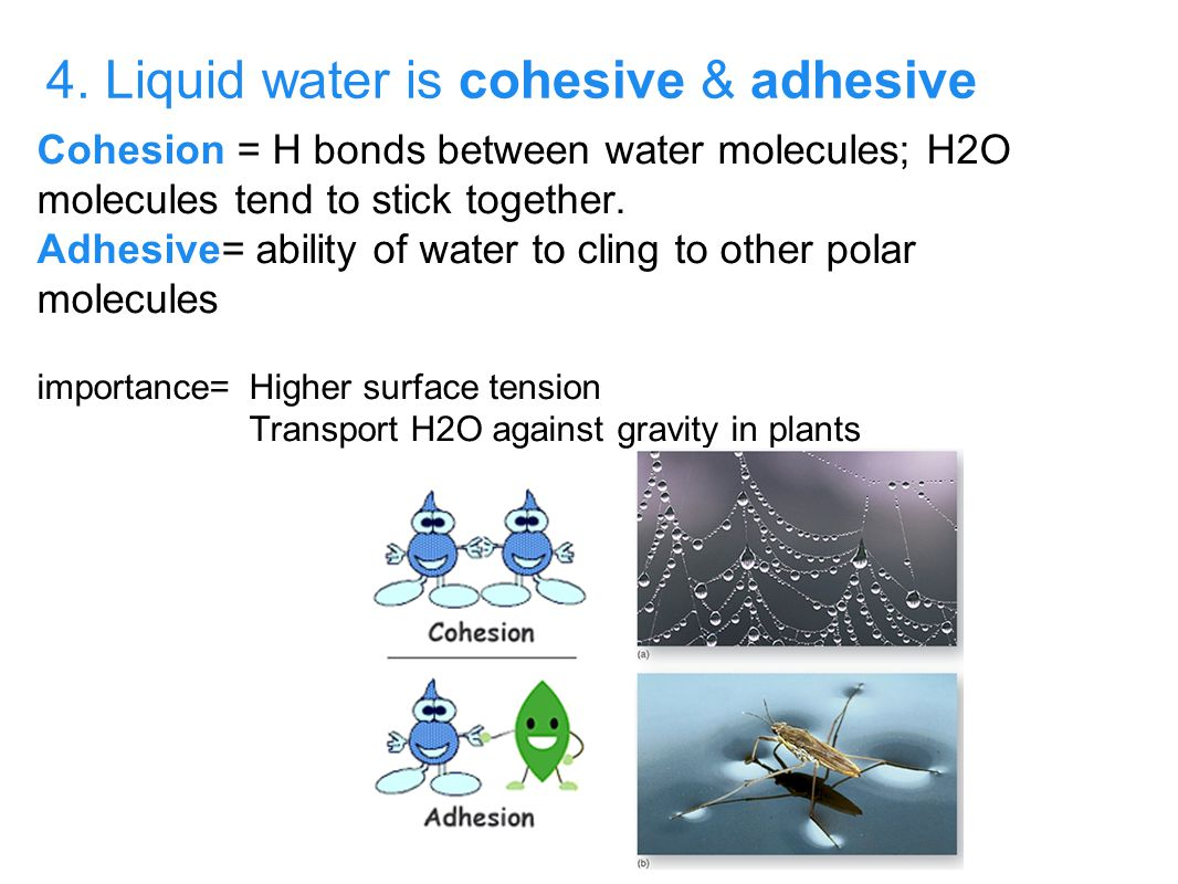 3. Water is universal solvent, and facilitates chemical reactions both outside of and within living systems.. a. Water is a universal solvent because