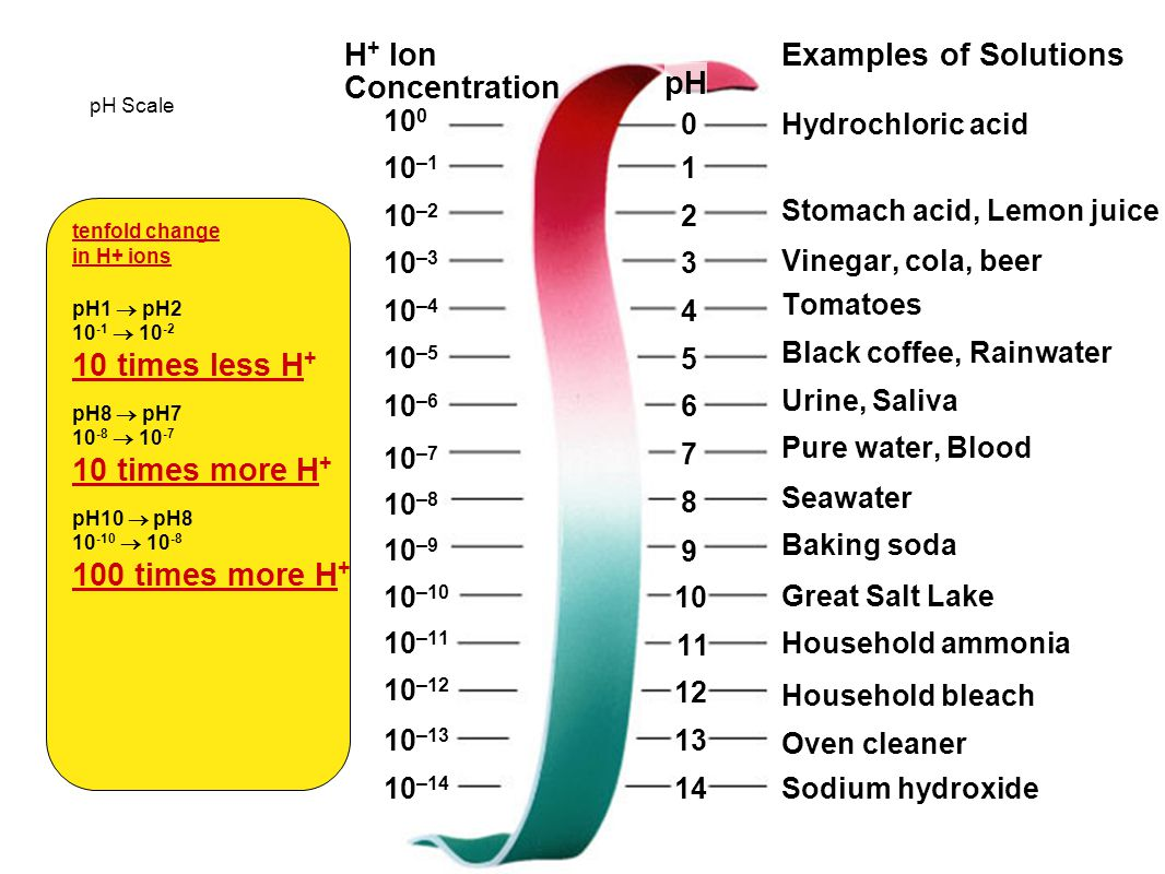 Create a Venn Diagram Comparing Acids and Bases Substances with hydrogen ions (H + ) Substances with hydroxide ions (OH – ) Taste sour Taste bitter Fe