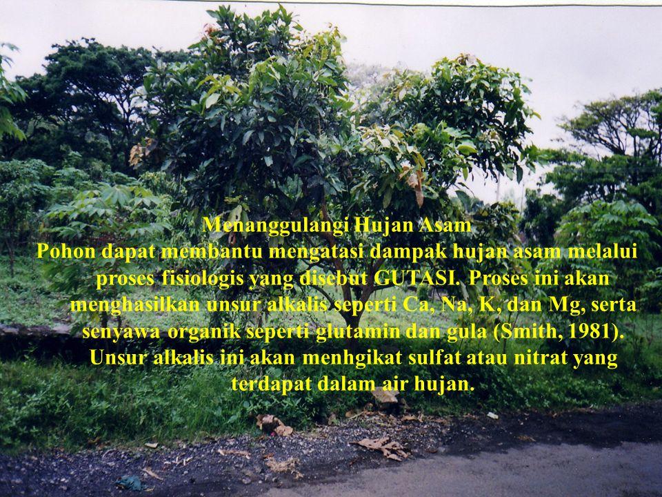 Menanggulangi Hujan Asam Pohon dapat membantu mengatasi dampak hujan asam melalui proses fisiologis yang disebut GUTASI.