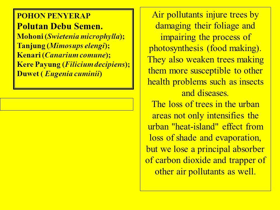 POHON PENYERAP Polutan Debu Semen.