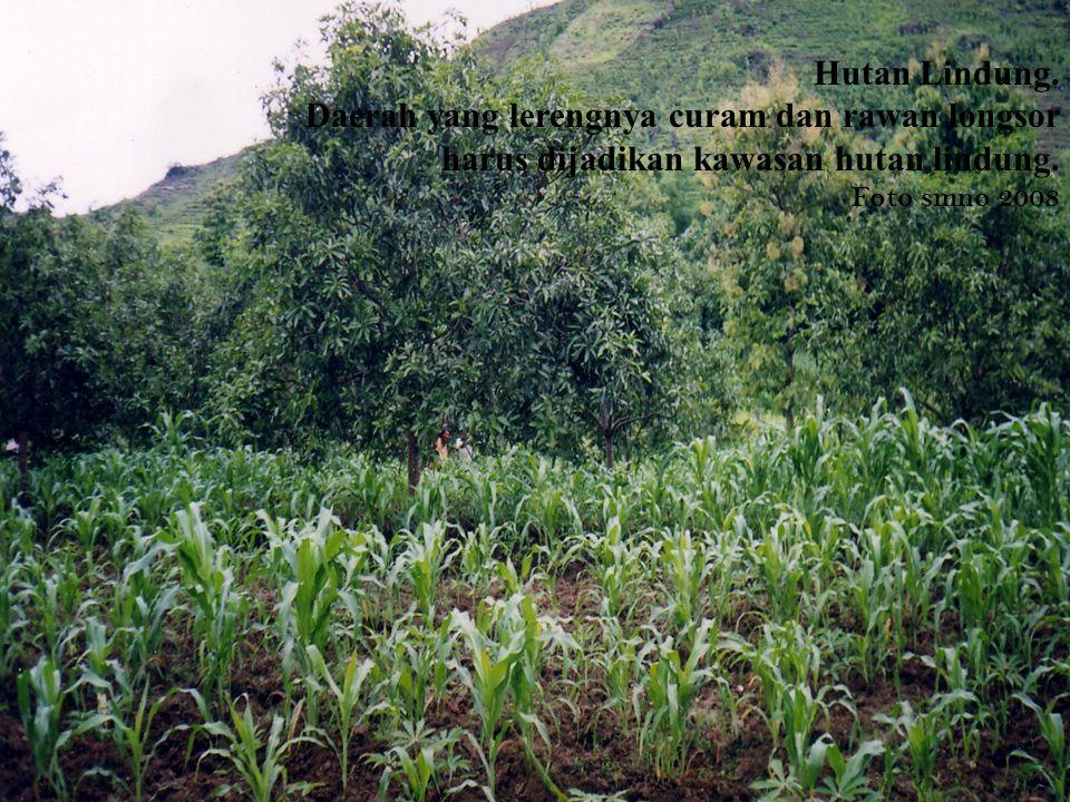 Hutan Lindung. Daerah yang lerengnya curam dan rawan longsor harus dijadikan kawasan hutan lindung.