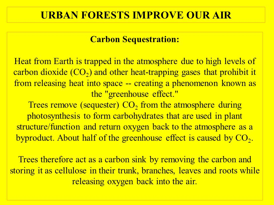 Carbon Sequestration: Heat from Earth is trapped in the atmosphere due to high levels of carbon dioxide (CO 2 ) and other heat-trapping gases that prohibit it from releasing heat into space -- creating a phenomenon known as the greenhouse effect. Trees remove (sequester) CO 2 from the atmosphere during photosynthesis to form carbohydrates that are used in plant structure/function and return oxygen back to the atmosphere as a byproduct.