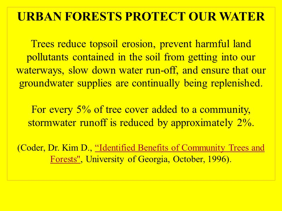 URBAN FORESTS PROTECT OUR WATER Trees reduce topsoil erosion, prevent harmful land pollutants contained in the soil from getting into our waterways, slow down water run-off, and ensure that our groundwater supplies are continually being replenished.