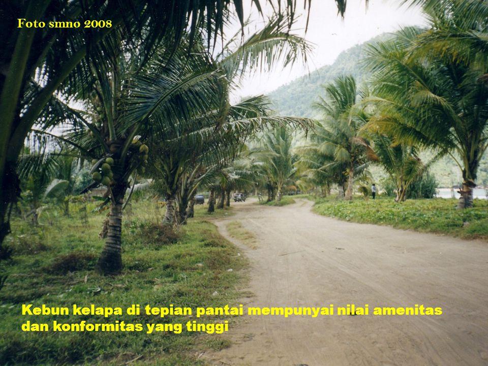 Foto smno 2008 Kebun kelapa di tepian pantai mempunyai nilai amenitas dan konformitas yang tinggi
