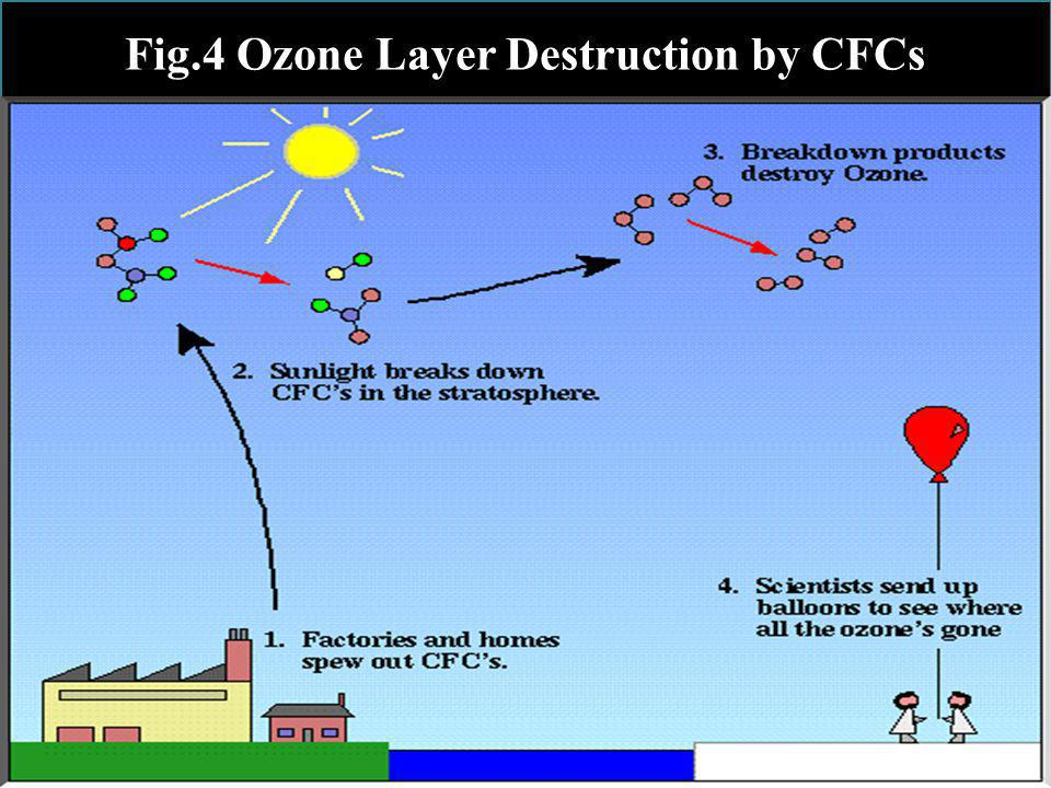 Ozone Layer Depletion The chlorine atoms act as a catalyst, and each can break down tens of thousands of ozone molecules before being removed from the