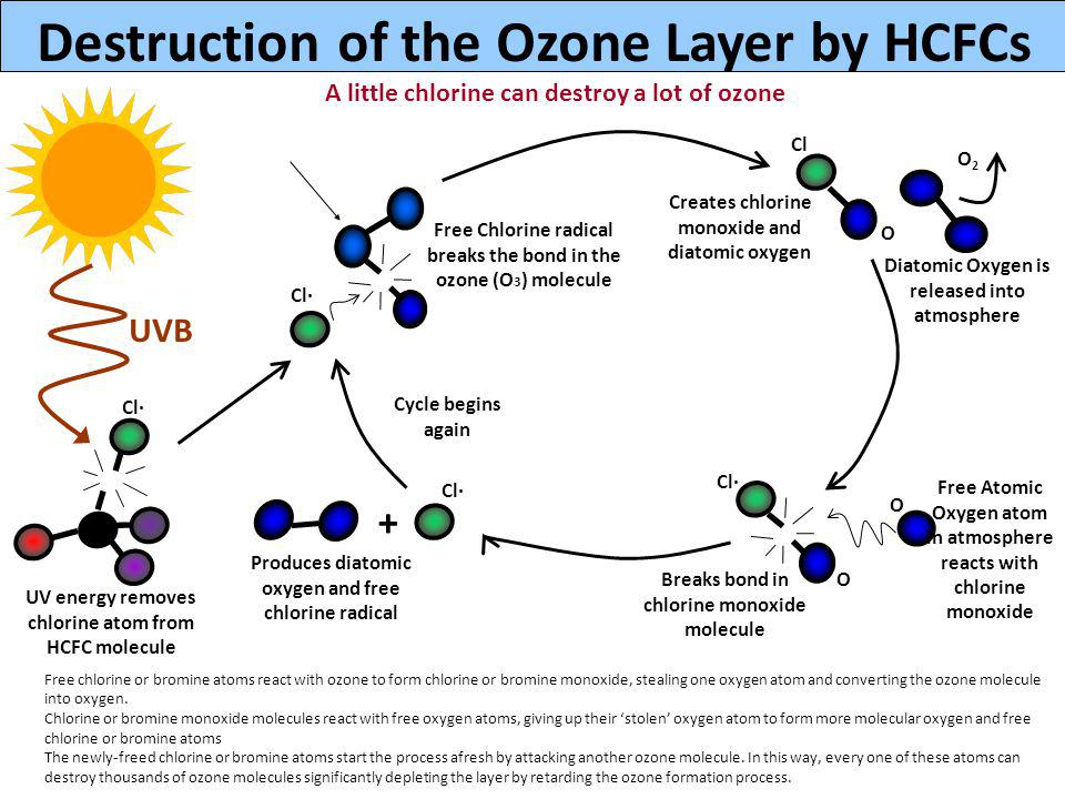 Destruction of the Ozone Layer by HCFCs UVB UV energy removes chlorine atom from HCFC molecule + Free Chlorine radical breaks the bond in the ozone (O 3 ) molecule Creates chlorine monoxide and diatomic oxygen Diatomic Oxygen is released into atmosphere Free Atomic Oxygen atom in atmosphere reacts with chlorine monoxide Breaks bond in chlorine monoxide molecule Produces diatomic oxygen and free chlorine radical Cycle begins again Cl· Cl O O2O2 O O Cl· A little chlorine can destroy a lot of ozone Cl· Free chlorine or bromine atoms react with ozone to form chlorine or bromine monoxide, stealing one oxygen atom and converting the ozone molecule into oxygen.