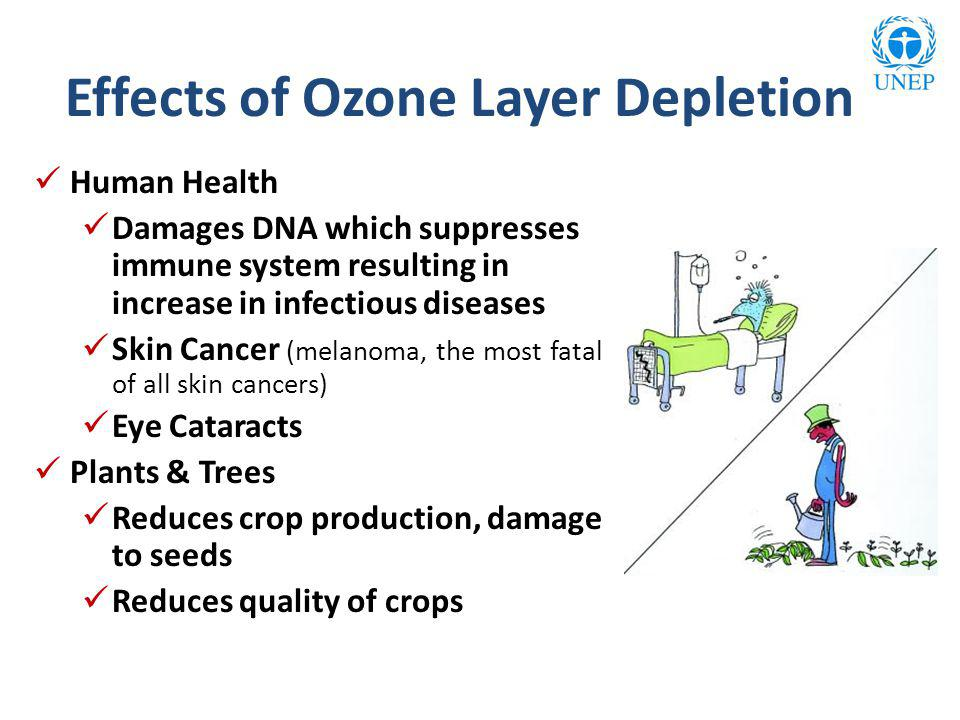 Human Health Damages DNA which suppresses immune system resulting in increase in infectious diseases Skin Cancer (melanoma, the most fatal of all skin cancers) Eye Cataracts Plants & Trees Reduces crop production, damage to seeds Reduces quality of crops Effects of Ozone Layer Depletion