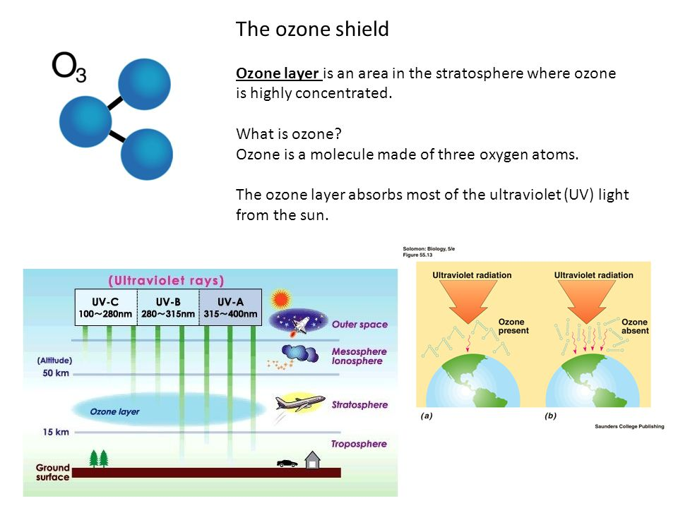 The ozone shield Ozone layer is an area in the stratosphere where ozone is highly concentrated. What is ozone? Ozone is a molecule made of three oxyge