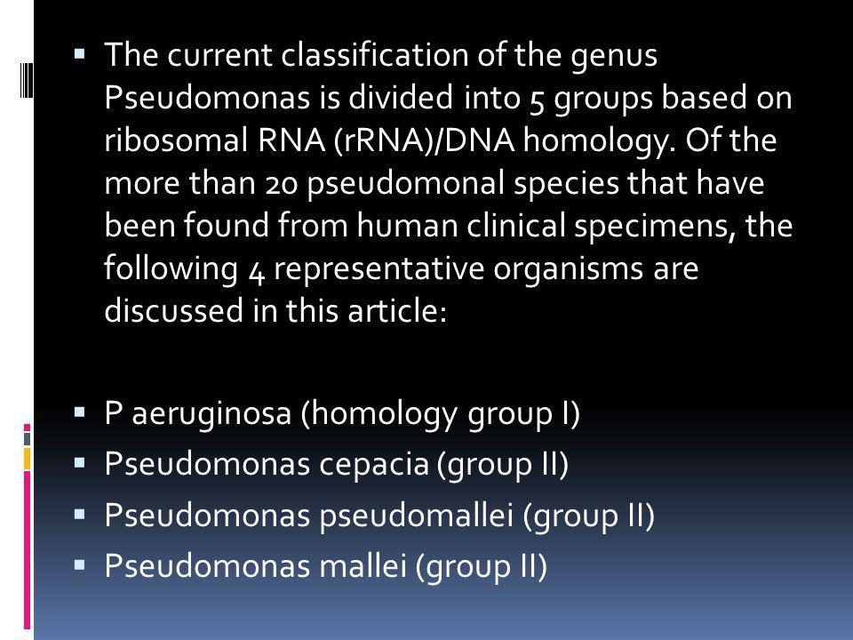 The current classification of the genus Pseudomonas is divided into 5 groups based on ribosomal RNA (rRNA)/DNA homology. Of the more than 20 pseudomon