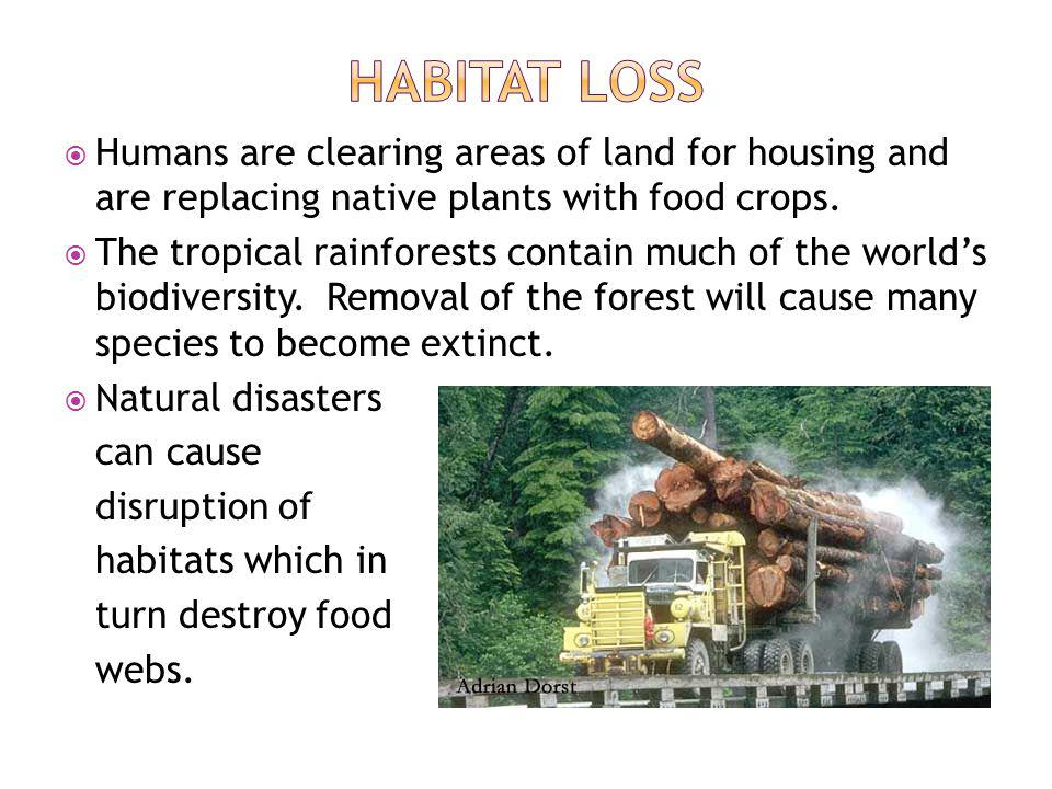 Humans are clearing areas of land for housing and are replacing native plants with food crops.