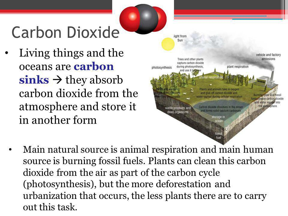 Living things and the oceans are carbon sinks they absorb carbon dioxide from the atmosphere and store it in another form Main natural source is anima