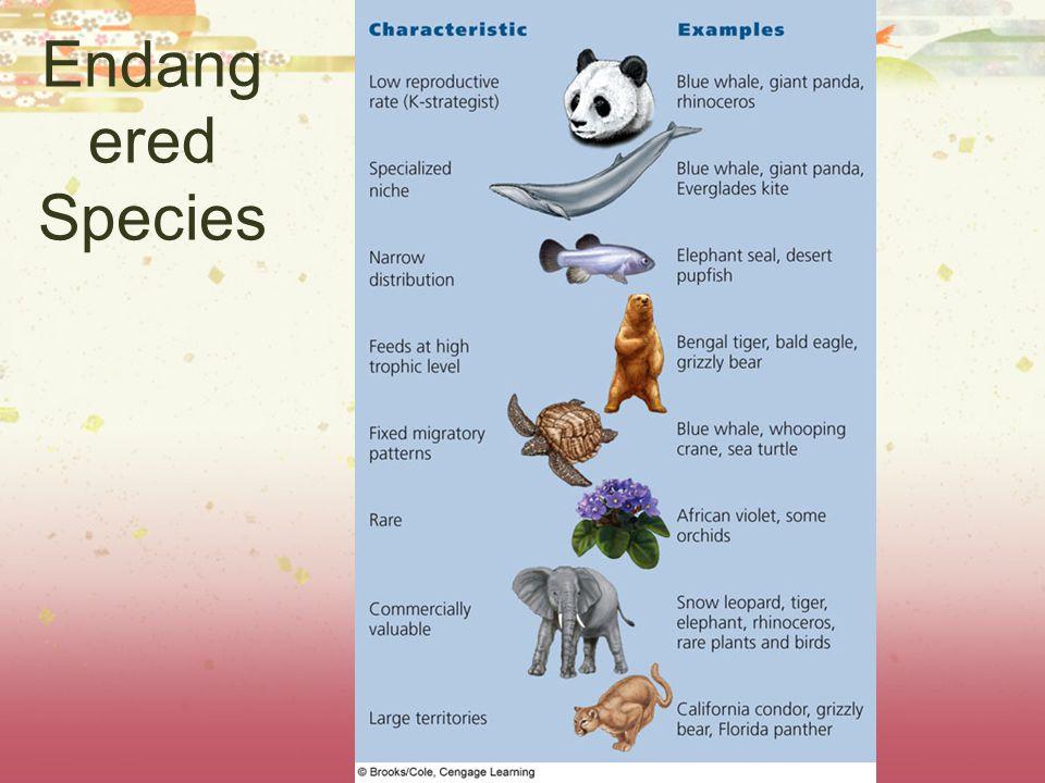 Endang ered Species