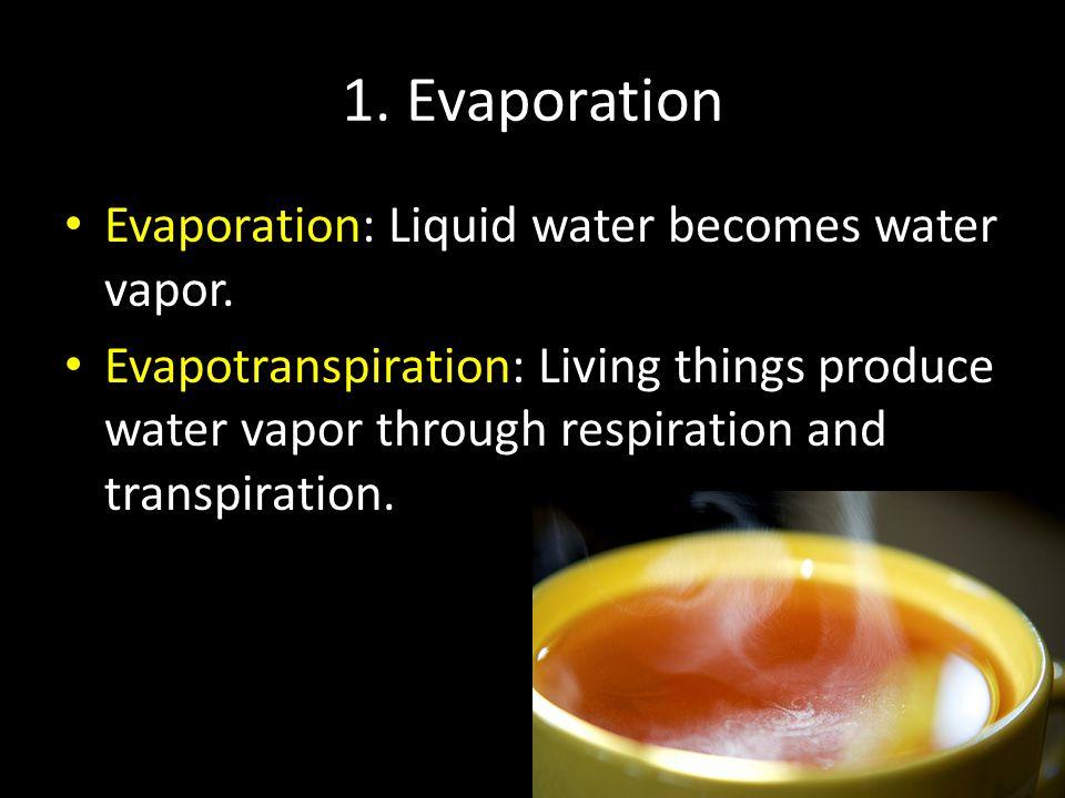 1. Evaporation Evaporation: Liquid water becomes water vapor. Evapotranspiration: Living things produce water vapor through respiration and transpirat