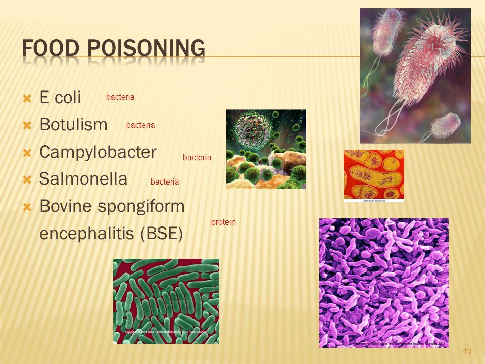 E coli Botulism Campylobacter Salmonella Bovine spongiform encephalitis (BSE) bacteria protein 43