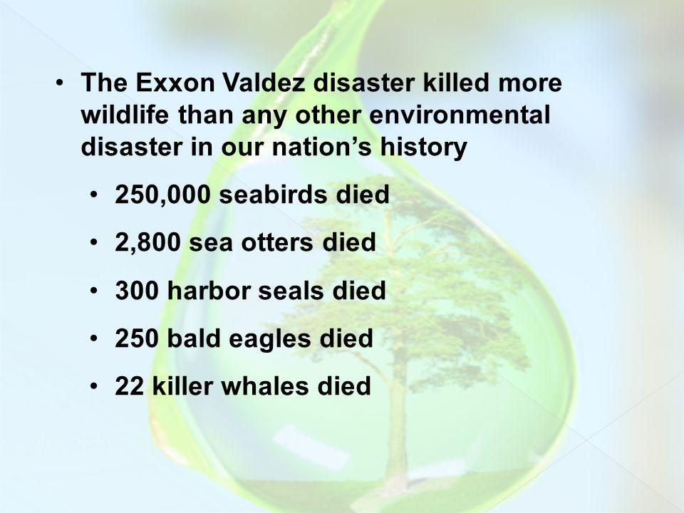 The Exxon Valdez disaster killed more wildlife than any other environmental disaster in our nations history 250,000 seabirds died 2,800 sea otters die