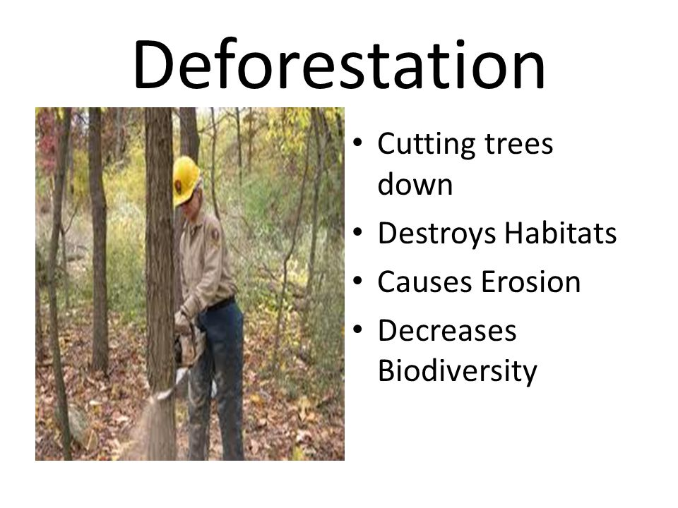 Deforestation Cutting trees down Destroys Habitats Causes Erosion Decreases Biodiversity