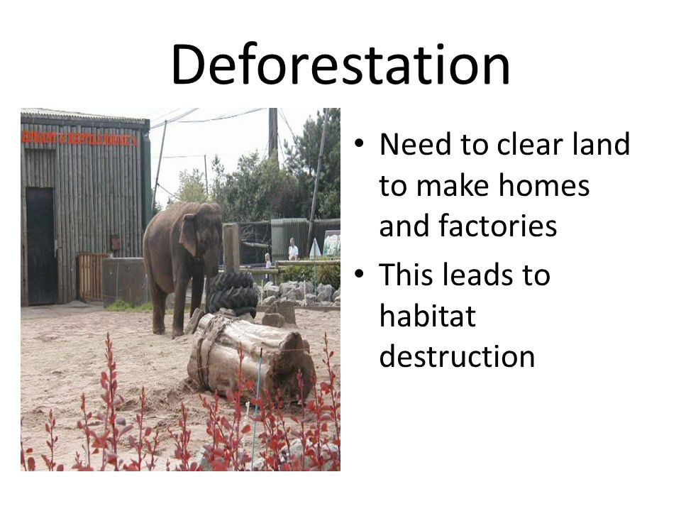 Deforestation Need to clear land to make homes and factories This leads to habitat destruction
