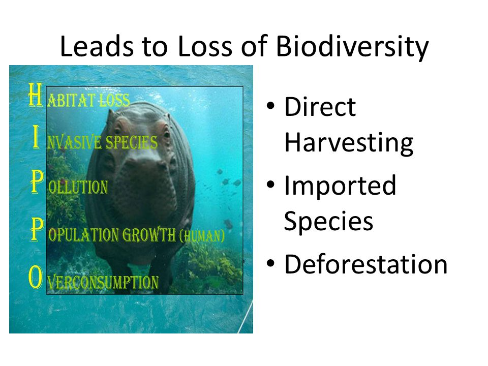 Leads to Loss of Biodiversity Direct Harvesting Imported Species Deforestation