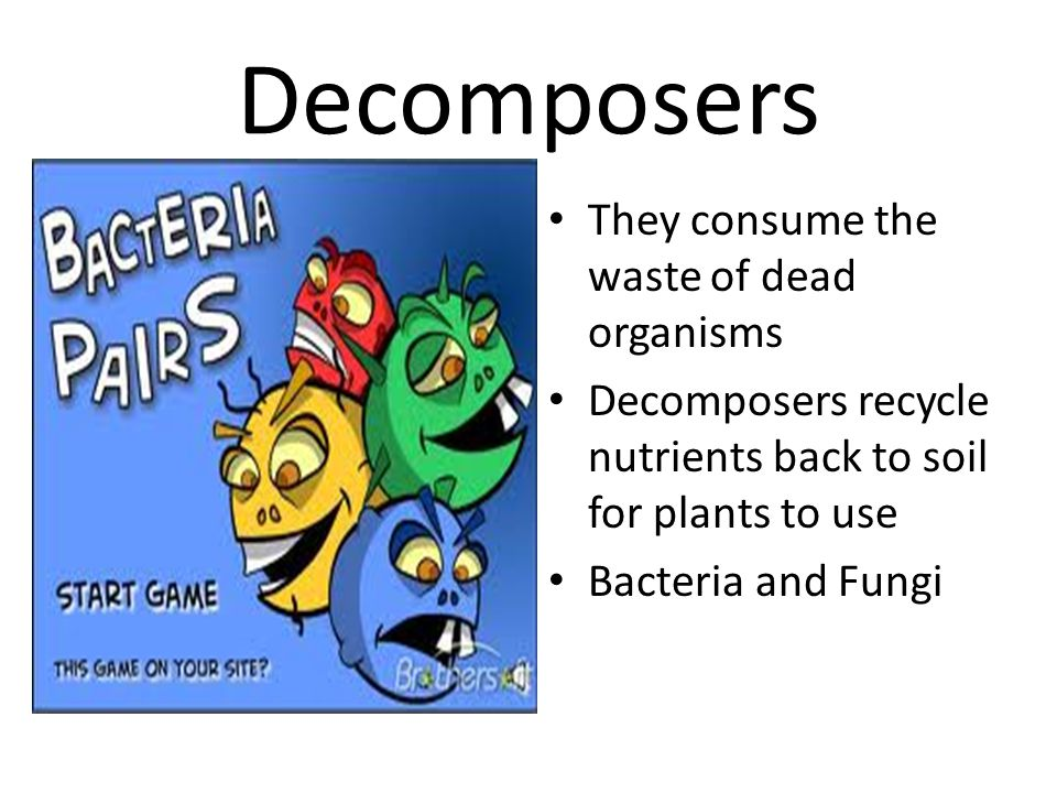 Decomposers They consume the waste of dead organisms Decomposers recycle nutrients back to soil for plants to use Bacteria and Fungi