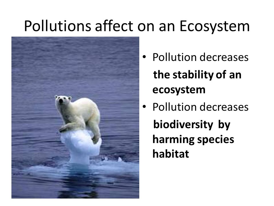 Pollutions affect on an Ecosystem Pollution decreases the stability of an ecosystem Pollution decreases biodiversity by harming species habitat