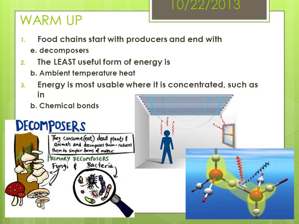 10/22/2013 WARM UP 1. Food chains start with producers and end with e. decomposers 2. The LEAST useful form of energy is b. Ambient temperature heat 3