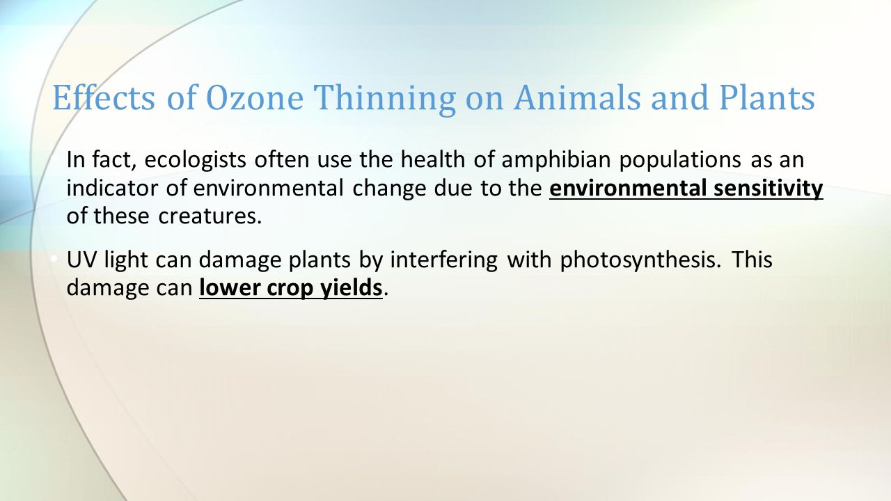 Effects of Ozone Thinning on Animals and Plants In fact, ecologists often use the health of amphibian populations as an indicator of environmental change due to the environmental sensitivity of these creatures.