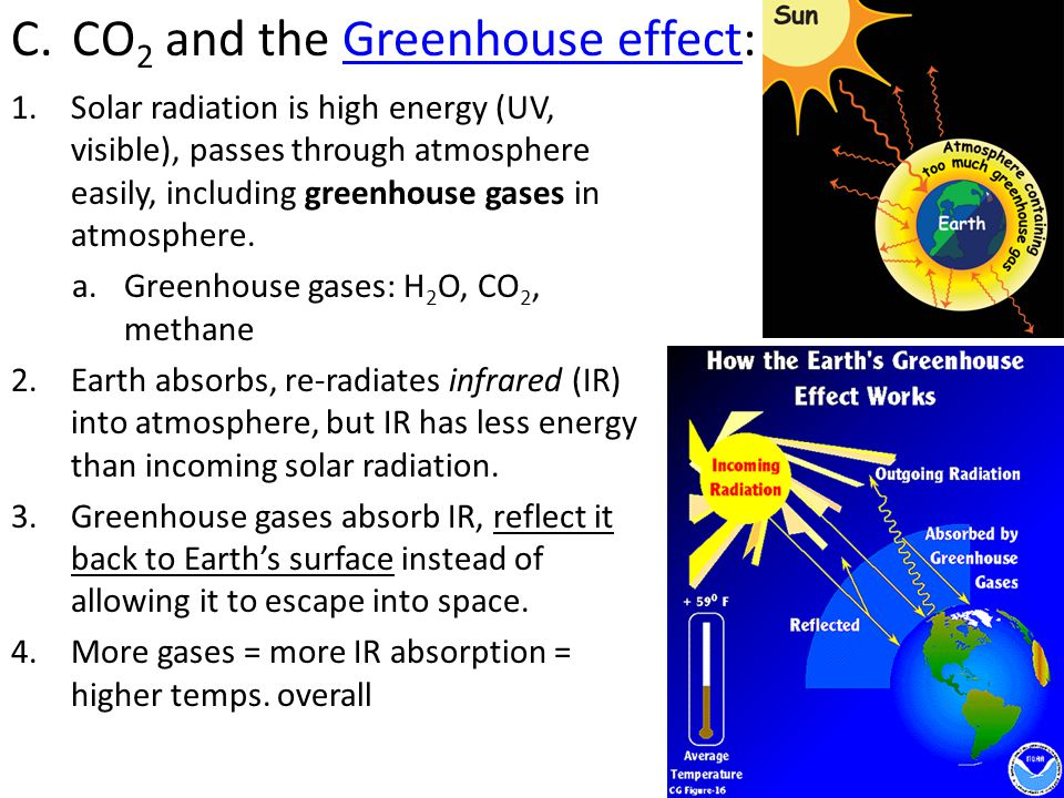 D.Human activities that increase levels of GG: 1.Burning coal/oil releases CO 2 2.Deforestation – why.
