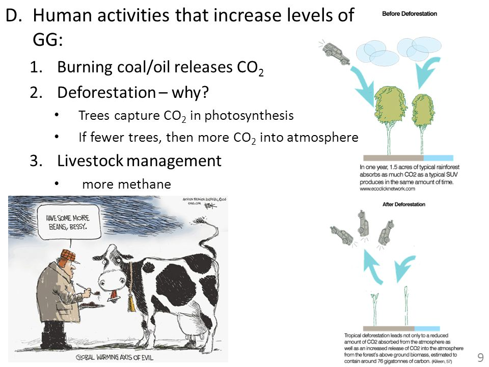 D.Human activities that increase levels of GG: 1.Burning coal/oil releases CO 2 2.Deforestation – why? Trees capture CO 2 in photosynthesis If fewer t