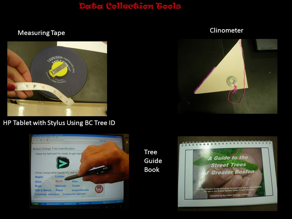 Tree Height and Diameter Tree height was measured using a Clineometer.