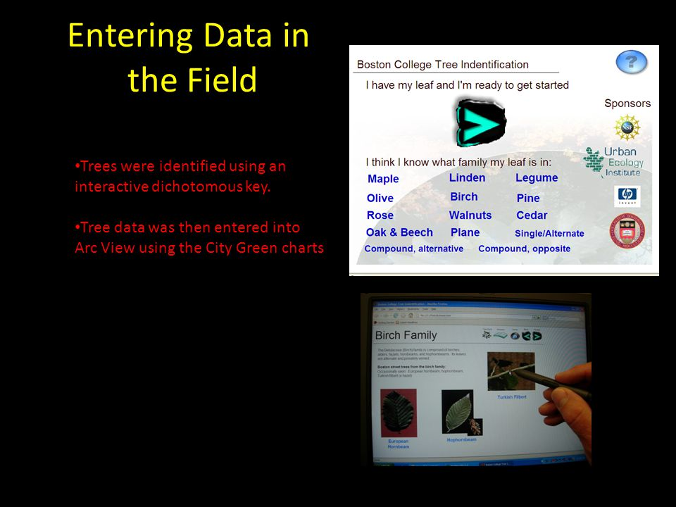 Entering Data in the Field Trees were identified using an interactive dichotomous key.