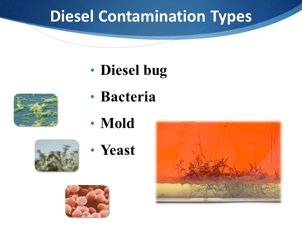 Diesel Contamination Types Diesel bug Bacteria Mold Yeast