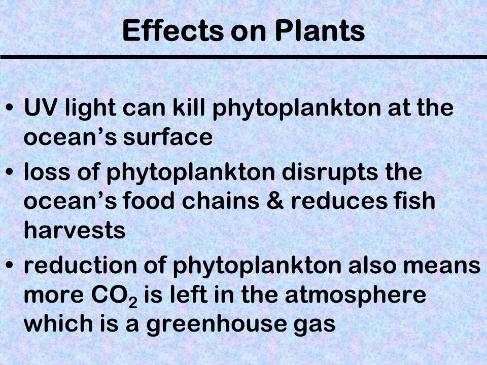 Effects on Plants UV light can kill phytoplankton at the oceans surface loss of phytoplankton disrupts the oceans food chains & reduces fish harvests