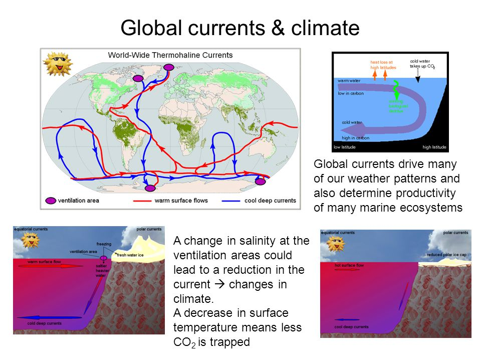 Global currents & climate Global currents drive many of our weather patterns and also determine productivity of many marine ecosystems A change in salinity at the ventilation areas could lead to a reduction in the current changes in climate.