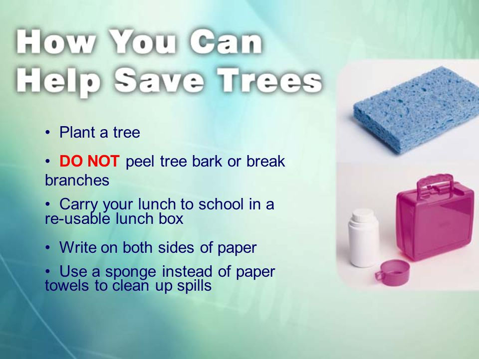 Plant a tree DO NOT peel tree bark or break branches Carry your lunch to school in a re-usable lunch box Write on both sides of paper Use a sponge instead of paper towels to clean up spills