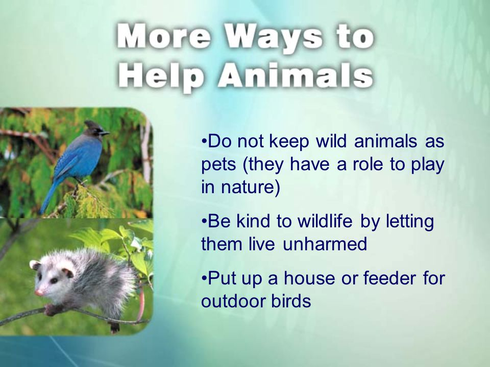 Do not keep wild animals as pets (they have a role to play in nature) Be kind to wildlife by letting them live unharmed Put up a house or feeder for outdoor birds