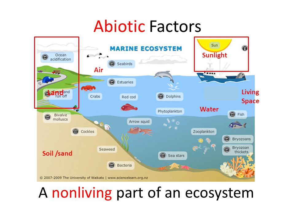 Abiotic Factors A nonliving part of an ecosystem Soil /sand Air Water Sunlight Living Space Land