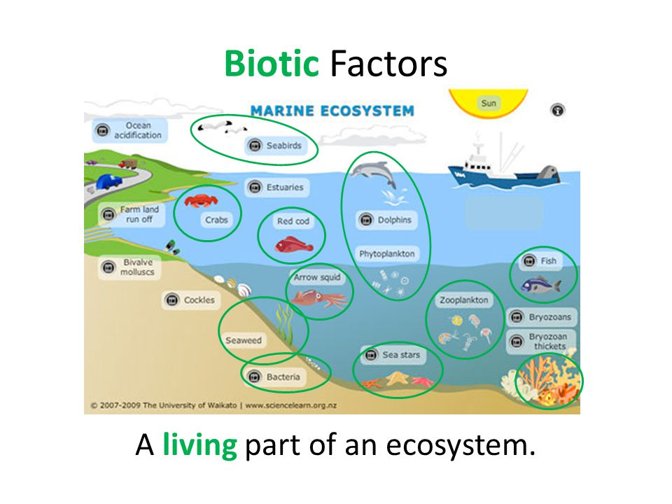 Biotic Factors A living part of an ecosystem.