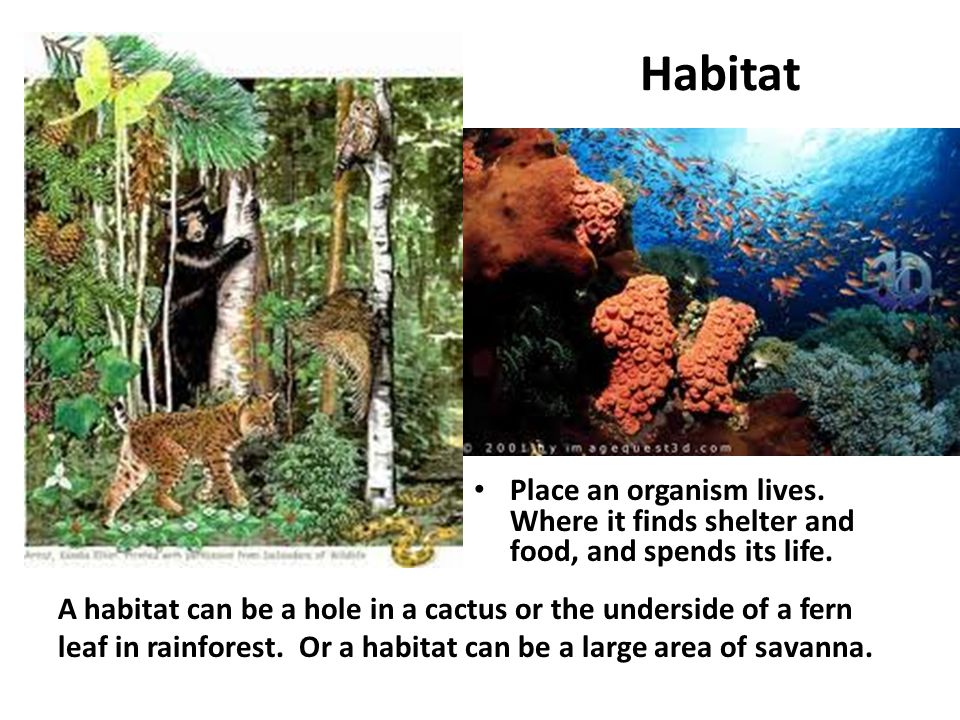 Habitat Place an organism lives. Where it finds shelter and food, and spends its life. A habitat can be a hole in a cactus or the underside of a fern