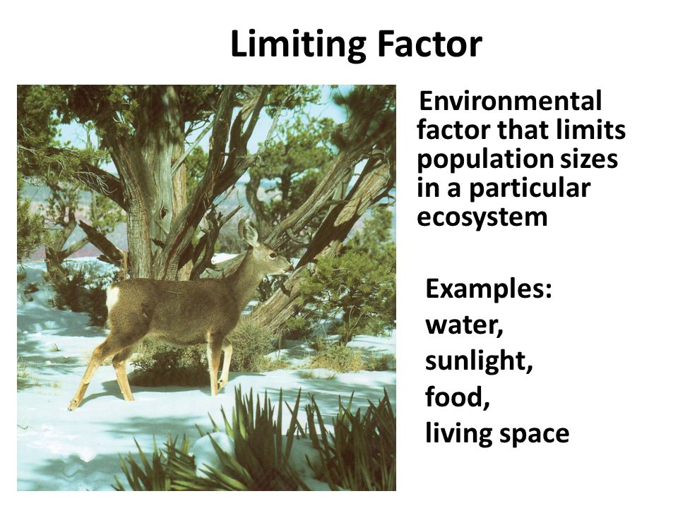 Limiting Factor Environmental factor that limits population sizes in a particular ecosystem Examples: water, sunlight, food, living space
