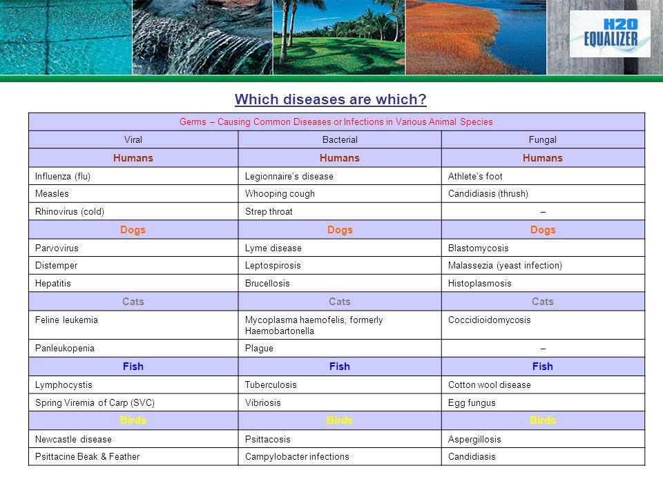 Germs – Causing Common Diseases or Infections in Various Animal Species ViralBacterialFungal Humans Influenza (flu)Legionnaire's diseaseAthlete's foot